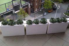 A mini hedge of succulents