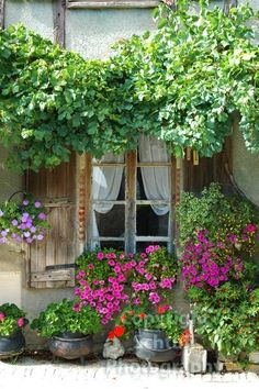 Europe France Rustic Window And Flowers Photograph Porches, Gazebos, Garden Windows, Garden Cottage, Through The Window, Window View, Window Boxes, Window Shutters, Dream Garden
