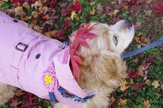 CoCCoLa 핑크 트렌치 코트