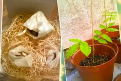 wisteria growing
