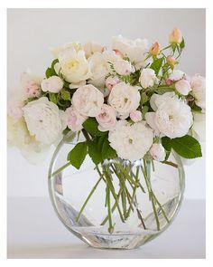 Bella Vista Flower Merchants Blog: David Austin Roses - On special this weekend at Bella Vista Florist