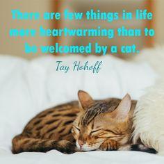#catquotes #catquote #cat #cats #catlover #catlovers #catlove #catlife #catloversclub #catslover #crueltyfreeblogusa Cat Love Quotes, Cat Life, Cat Lovers, Cats, Animals, Gatos, Animales, Animaux, Animal