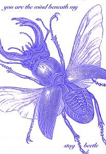 stag beetle card