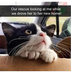 Funny Animal Memes, Cute Funny Animals, Funny Animal Pictures, Cat Memes, Funny Cats, Funny Memes, Cats Humor, Funny Horses, Hilarious Pictures