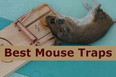 Choosing Best 10 Mouse Traps Bait ever is not hard for you. Here You will find top 10 best mouse traps of all time and great compilation to kill mouse effect. Best Mouse Bait, Alien Life Forms, Mouse Traps, Pest Control Services, Food And Drink, Garage, Plastic Surgery, Rats, Kitchens