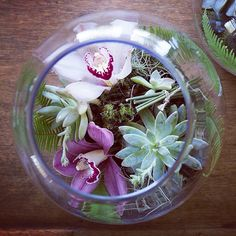 Fish bowl with natural moss and succulents. for a statement table centrepiece Table Arrangements, Table Centerpieces, Herb Planters, Wall Installation, Glass Terrarium, Flower Show, Event Styling, Fresh Flowers, Succulents