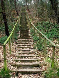 Prachtige trap in de bossen van Groet/Schoorl