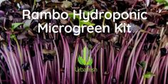 Fulfill your green thumb goals and cultivate thriving brilliantly colored microgreens in your own home! The Rambo Hydroponic Microgreen Kit includes enough Rambo Radish seeds (Non GMO and Organic) along with hydroponic grow mats to grow 4 crops of delicious and visually striking additions to your table and food. Plant your seeds in the reusable micro farm units and you'll see the leafy crop surface in just a little over a week (photos are of the actual units grown out at 8 days). These…