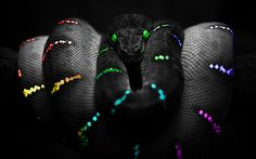 colorful snakes | Colorful Neon Snake Image: