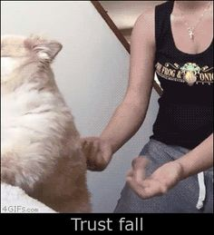 Dog Trust Fall gifs gif funny dog funny gifs humor animal gifs dog gifs
