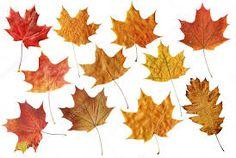 Image result for fallen leaves