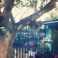 #rincón verde #terraza #plantas #odelito Foto Yolanda Estévez http://journal.knitbrary.com