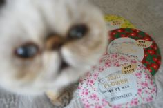 Котик и тканевые маски )
