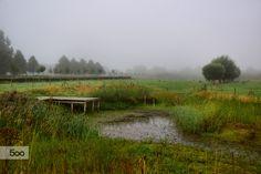 Misty morning by Corina Ene  on 500px