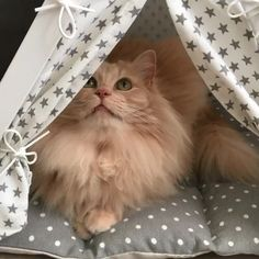 Cozy cat bed and kitty inside posing for the camera. Dog & Teepee - more than just cat and dog bed. We've created a space that your fur babies will love calling home. Cat Teepee, Teepee Bed, Exotic Birds, Colorful Birds, Skinny Pig, Bird Sketch, Bird Wallpaper, Bird Crafts, Baby Cats