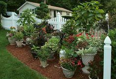 Container Garden Garden! Perfect for a condo