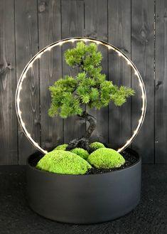 Bonsai Light by Donaldo Radovich
