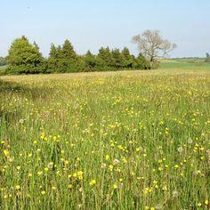 English meadow in May - ahhhh