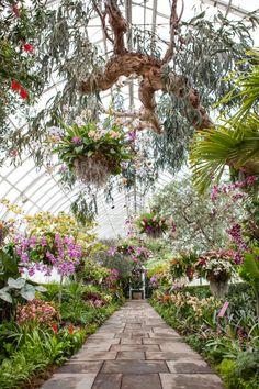 Orchid Greenhouse                                                                                                                                                                                 More