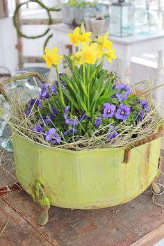 Spring Daffodils and Violas in a vintage metal container
