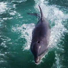 Sarasota Boat tour offers a fully narrated wildlife tour of 90 minutes through the pristine intracoastal waterways  join us while we explore the beautiful dolphins in paradise