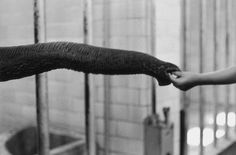 Elliott ERWITT :: Central Park Zoo, NYC, 1953 more [+] by Erwitt