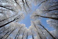 Winter Frost | pb-120130-winter-frost-trees-nj.photoblog900.jpg