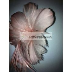 Hat Trims/feather Tims/ Feather Hat Pin/ feather flower/Corsage/Feather Accents Wholesale Bulk Dozen piece Crafts trims earing Crafts, Fashion Accessories, Hair Accessories, Home Decor, Mask Making and Millinery