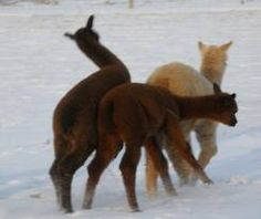 playin' in the snow!