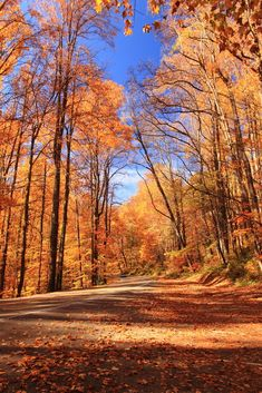 Did you know that there is a secret entrance to the Great Smoky Mountains National Park?