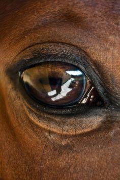 Brown Horse by javidelucar Cute Horses, Pretty Horses, Horse Love, Beautiful Horses, Horse Photos, Horse Pictures, Horse Head, Horse Art, Horse Anatomy