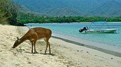 Cinto, Parque Nacional Natural Tayrona. Colombia. Camel, Natural, Animals, National Parks, Animales, Animaux, Camels, Bactrian Camel, Animal