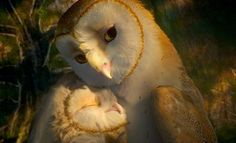 Mother's love is the most sublime of all affections..