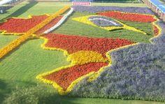 plantação de flores - Pesquisa Google