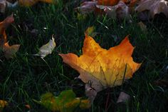 A little autumnal image and thought