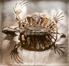 Turtle--Dinosaurs In Their Time, Carnegie Museum of Natural History. Image credit: Frank Kovalchek.
