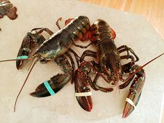 How to have a lobster bake at home