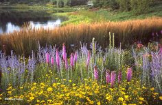 Gardens of the Great Basin – Chicago Botanic Garden, Glencoe, IL | | Oehme van Sweden | Oehme van Sweden