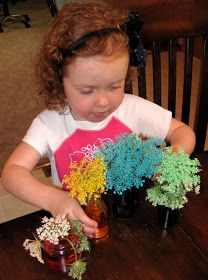 put Queen Anne's Lace into water with food coloring (and a little sugar) to color them Click on picture to go to The Chocolate Muffin Tree: Queen Anne's Lace Garden