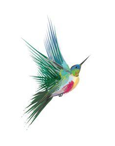 Hummingbird Art Print - Limited Edition by Sara Shashani | Minted