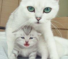 guagua Cat