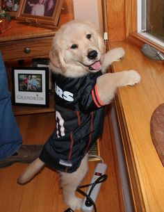 ITS A PUPPY IN A BEARS JERSEY!!!!!!