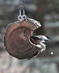 Love - stump bird feeder hanging