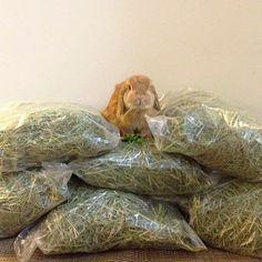 Eddy & Rambo Bunny : diet