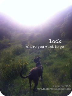 Look:go. Lessons from the trail. xo