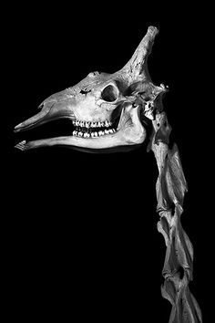 (Photograph: Patrick Gries/Thames & Hudson www.patrickgries.com). 1 1 · The Irregular Anatomist Veterinary Anatomy