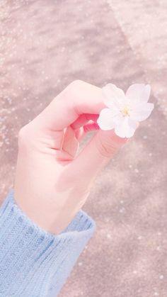 cherry blossom ^^