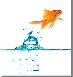 fish-jumping-big