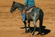 How much weight can a horse carry? Horses can comfortably carry about 15-25% of their body weight.