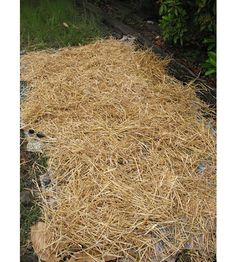 Growing Potatoes in Straw and Old Newspapers - No digging involved. Very interesting method.
